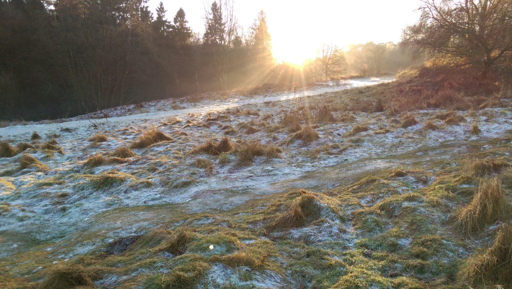 Frost and sun on heathland